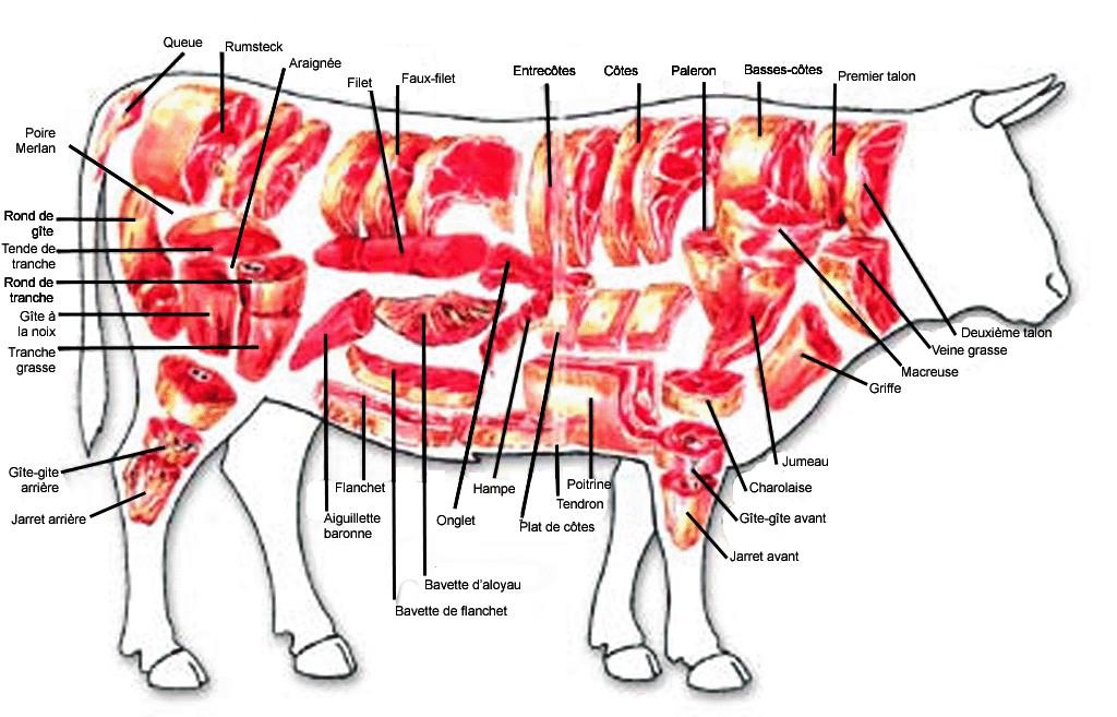Le bœuf en détail